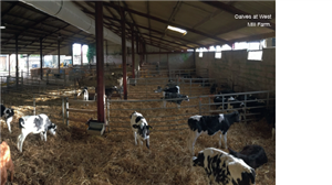 Afbeelding: Joh nBradds calf shed