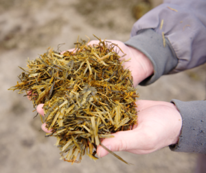 Get the most from your silage