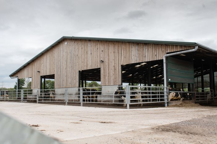 Cow housing: the facilities at Mansfield Farm