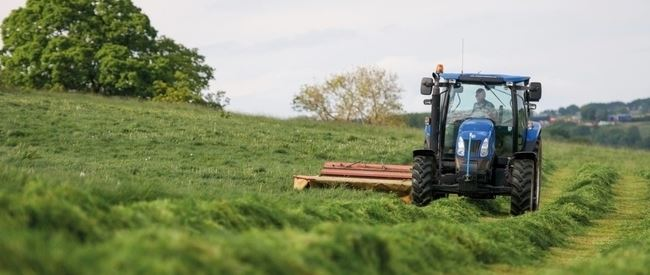 First cut silage