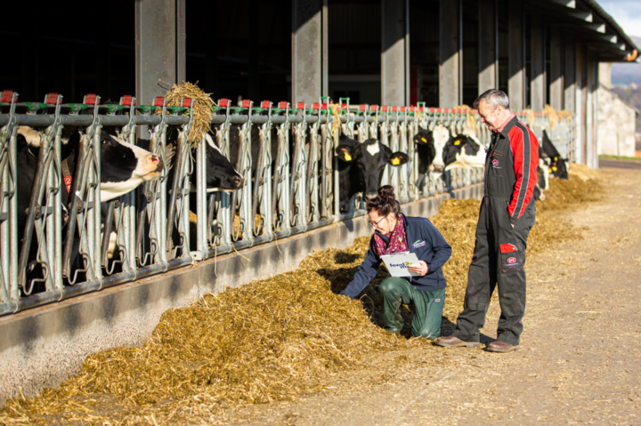 Good quality forage is the building block on which the herd ration is based