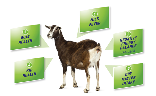 Afbeelding: Transition diagram goat