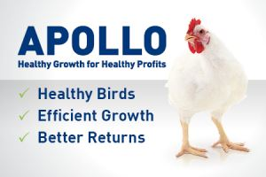 Afbeelding: APOLLO UK web banner3